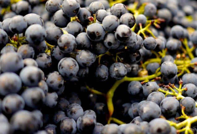 Resveratrolul si endometrioza – 3 super alimente + 5 studii pe care sa le stii